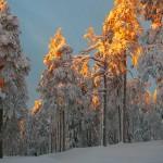 Auringon valo lumisessa metsässä.