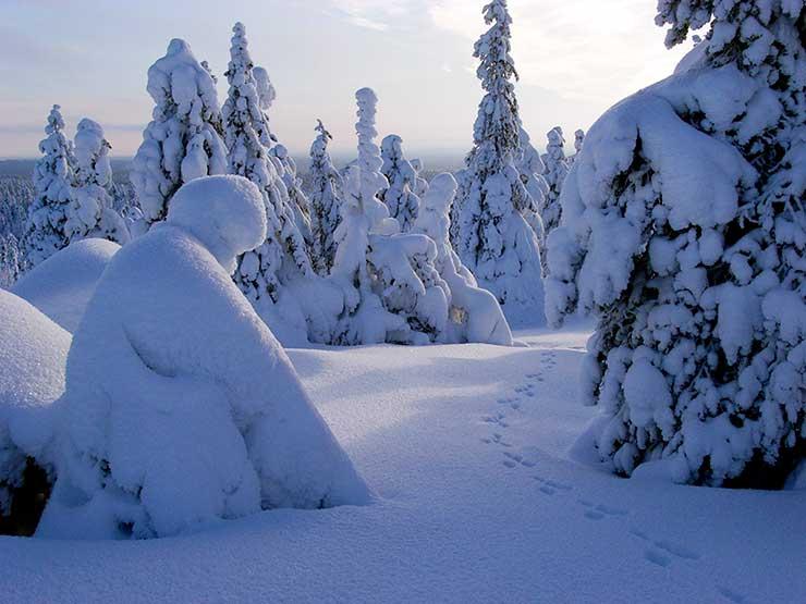 Talvinen tykkykuusikko Palotunturissa, etualalla ihmishahmon muotoinen tykkymuodostelma.