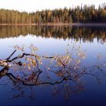 Ruskalehtinen oksa heijastuu järven peilityyneen pintaa.