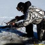 Mies nostaa verkkoon jäänyttä kalaa avannosta.